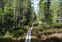 Spring in Lapland