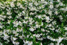 ♡ Tuin- Wakjes, Planten en Bomen