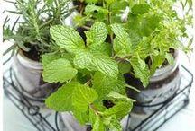 Garden Ideas / Garden Sprayers and accessories at their Finest http://tinyurl.com/zesps5d