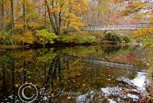 Creeks and Streams