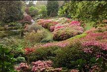 National Rhododendron Garden Olinda Victoria Australia / April 2013 and October 2014