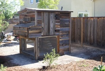 Chicken Coops / We'll build a chicken coop right in your own backyard using recycled materials.