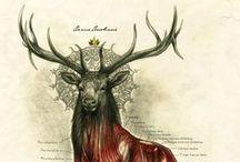 deer / deers