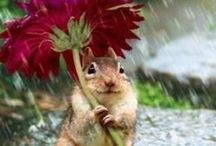 Adorable animals / This is a board some adorable animals!!