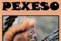 Pexeso / Online pexesá, odkazy v popise.