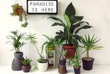 plantas / Mis amigas bellas y silenciosas / by Marcela Emma Retamero