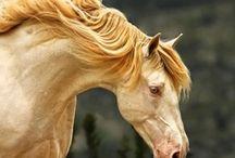 Paarden/Horses