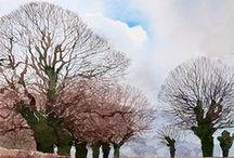 Trees in Art / by Eric Kaptein