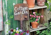 Garden inspiration / by Teacup And Roses