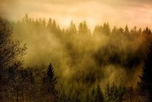 Autumn / Crisp air and wonderful burning colours. Mist, trees and true beauty