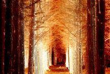 Orange / by Pawel Dolatowski