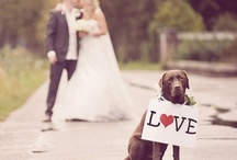 Happy Pets @ Weddings