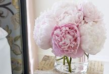 ^^^ Flowers ^^^ / by Gina Gallardo