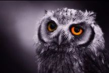 Owls / So pretty. So wise and full of humor!
