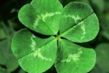 Luck of the Irish / by Sophie Moss