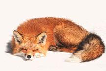 fox i ♥ / Be kind to fox(es) - never wear fur! :) / by Johana Ufa