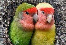 ANIMAL : Love birds i love / by Johana Ufa