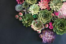 PLANTS : Succulent & cactus / by Johana Ufa