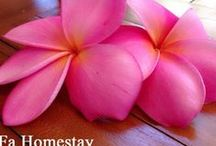 Homestay Yogyakarta / A very warm welcome from SAFa Homestay. Our family home-stay is in Special region of Yogyakarta, Indonesia. Near by Adisucipto International Airport, 5 minutes drive by car. We have been running family Homestay since 2013, and love welcoming guests to our Homestay. We have well appointed family rooms with comfortable beds, air conditioned and can accommodate up to six guests in one family room.  Email: rosanasafahomestay@gmail.com  Phone: +628112540226 (WhatsApp for direct reservation)