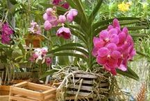 Better-Gro Orchid & Plant Supplies / Find these Better-Gro Orchid Supplies at select Home Depot and Lowe's stores. Find more information on retailers that carry our products at www.better-gro.com.
