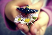 I love butterflies :))