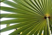 * thématique tropicale *