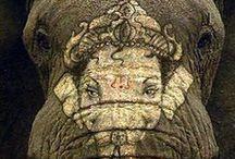 Elephants / You get up and paint a smile on your face, this is a part of your daily costume (Felkelsz, és az arcodra egy mosolyt festesz, hisz ez is kell mindennapos jelmezedhez) ॐ ✿