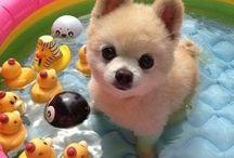 Tiere<3 / Cute