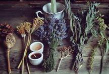 Herbal remedies / by jessicalouiseryan@gmail.com jessicalouiseryan@gmail.com