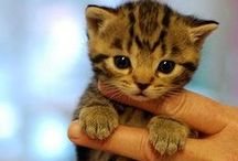 "My Kitty cats / Gatos / Pequeñas bolas de pelo, pero son tan bonitos. Small hairballs but they are so beautiful.        ""(*:*)"""