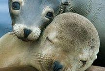 Love animals / Las criaturas más fieles y desinteresadas de todo el planeta: ellos sólo quieren AMOR. //    The most loyal and selfless creatures around the world: they just want LOVE.