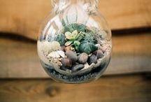 Terrarium / Qué bonito terrario y qué fácil parece hacerlo. Un pequeño pulmón en casa. // A little lung at home. Easy to do and care ??