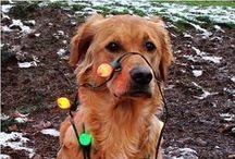 amores perros y otros parientes / mascotas  pets