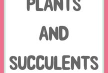 Plants and Succulents / A selection of plants, succulents, plant shelves and displays.