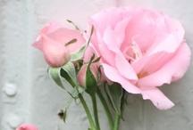 Garden en flowers