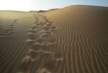Visiting the UAE - ideas / February 2014