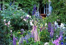 garden. / Gradening