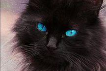 ANIMALITOS. By Ana María. / Todos son hermosos, pero definitivamente, los gatos son mis favoritos.