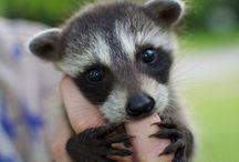 Cute animals / Cuties