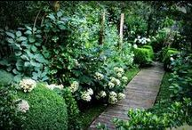 Garden / Outdoor spaces