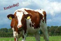Creagaat's cards - photo animals
