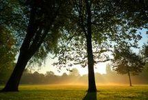 Creagaat's cards - landscapes / nature / flowers