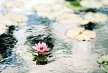 Naturaleza, Flores, jardines