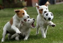 Famous football players with dogs / Famous Football players with Dogs!