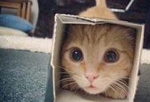 gatti gatti gatti