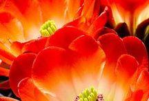 cactus & c