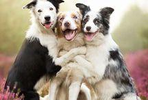 Tiernos y adorables animalitos / Fotos de perritos