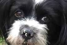 REBLUJO - Una Maravillosa Mascota / Mi querida Mascota