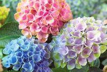 Flores y Colores de la Naturaleza 2 / Color y Vida