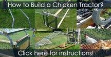 Chicken Tractor - Building Instructions Steps / How to build a mobile chicken coop, chicken coop on wheels, portable chicken coop or chicken ark. DIY instructions with illustrations.
